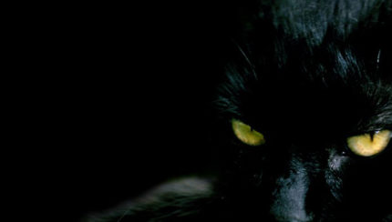 O gato preto de edgar allan poe nefasto